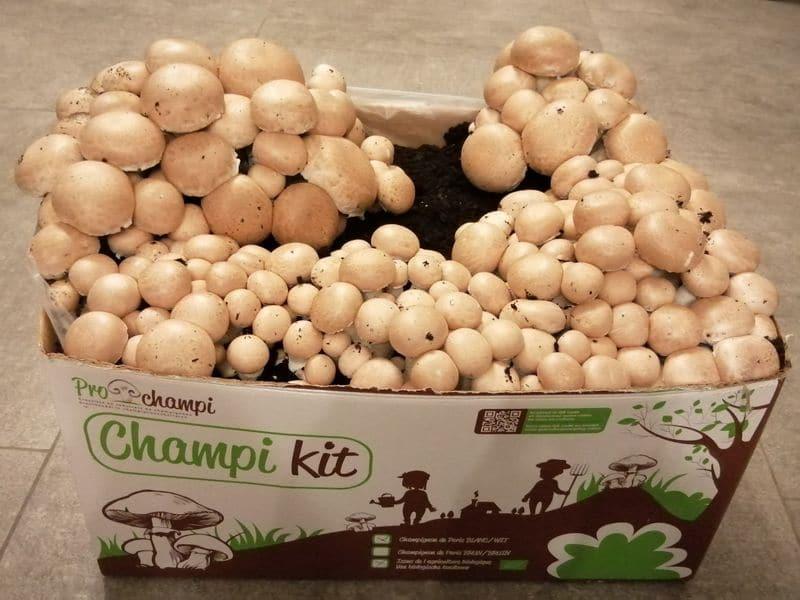 Prochampi kit champignons